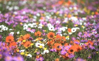 Flower Season is here…