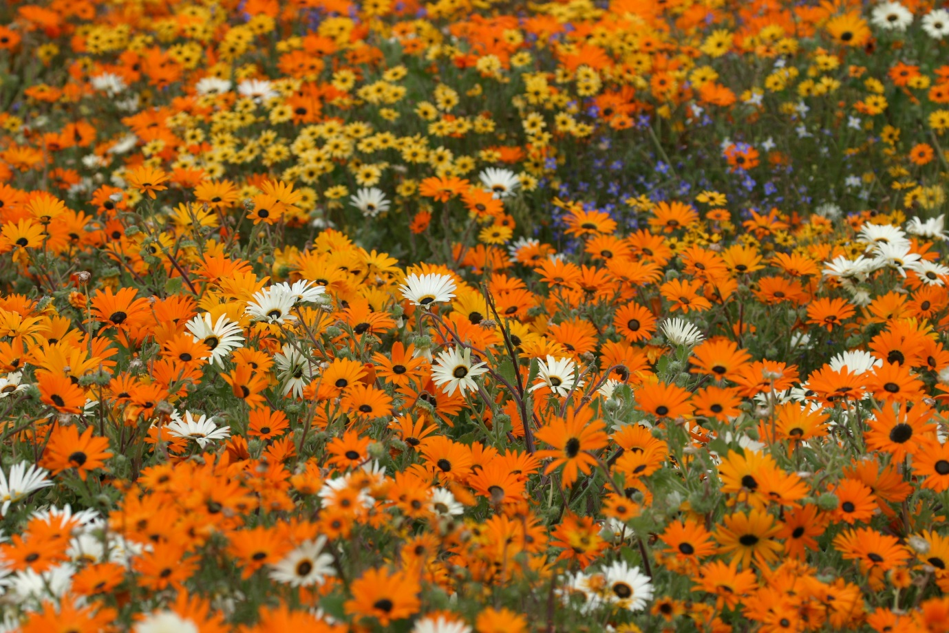 Wildflowers - beauty of the week